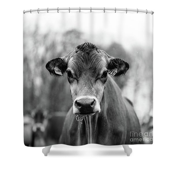 Vermont Cow Square Shower Curtain