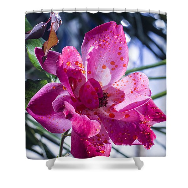 Vibrant Pink Rose Shower Curtain