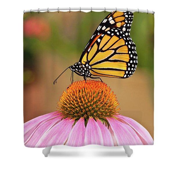 Monarch Butterfly On A Purple Coneflower Shower Curtain
