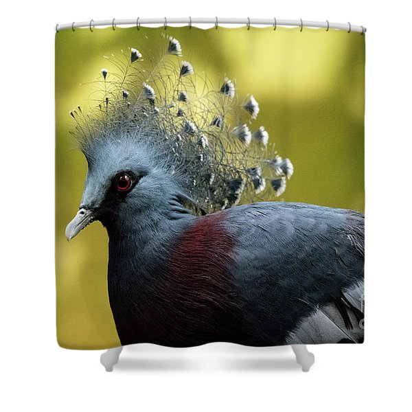 Victoria Crowned Pigeon Shower Curtain
