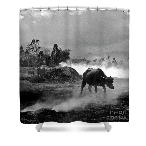 Vietnamese Water Buffalo  Shower Curtain