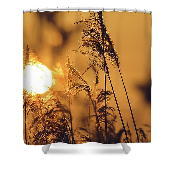 View Of Sun Setting Behind Long Grass C Shower Curtain