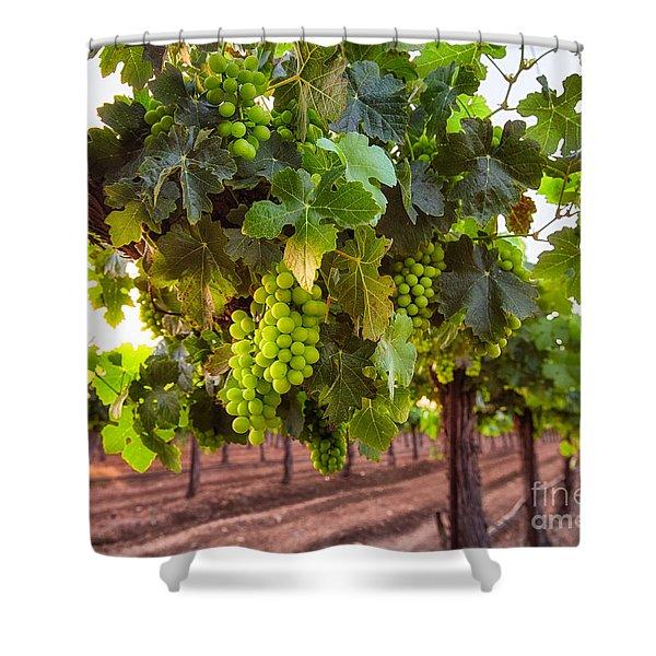 Vineyard 3 Shower Curtain