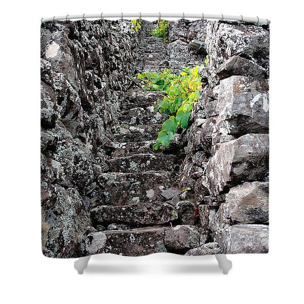 Vineyards In Azores Islands Shower Curtain
