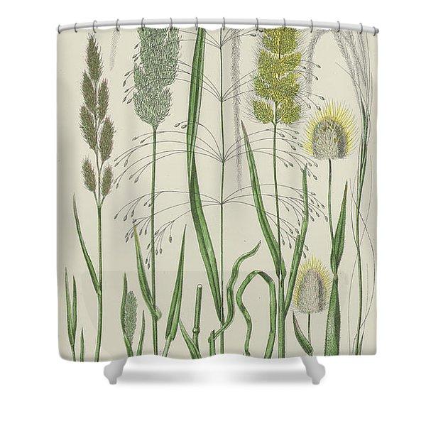 Vintage Botanical Print Of Grass Varieties Shower Curtain