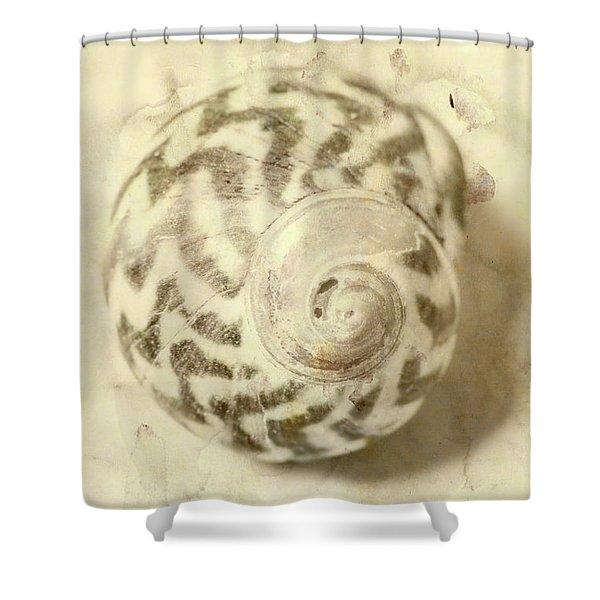 Vintage Seashell Still Life Shower Curtain
