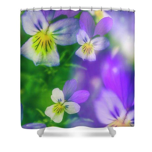 Viola Tricolor Shower Curtain