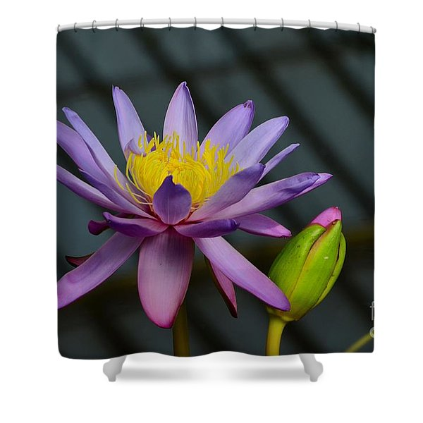 Violet And Yellow Water Lily Flower With Unopened Bud Shower Curtain