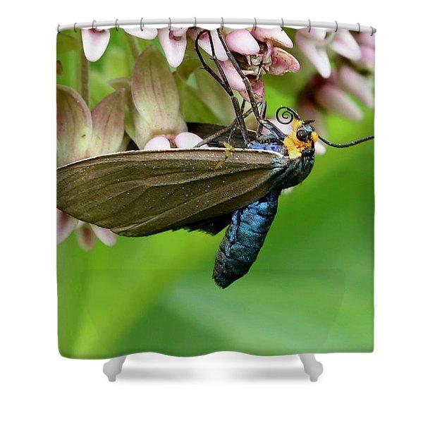 Virginia Ctenucha Moth Shower Curtain