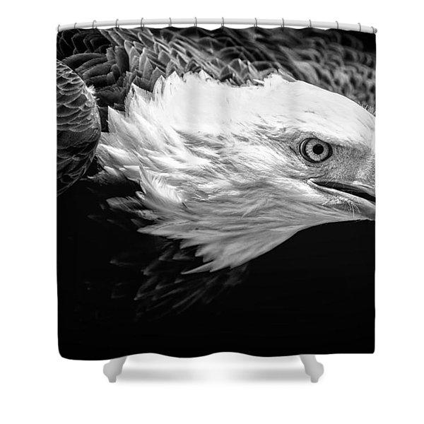 Visual Shower Curtain