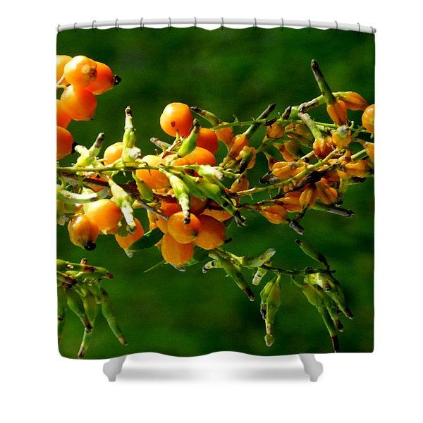 Vivid Berries Shower Curtain