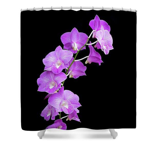 Vivid Purple Orchids Shower Curtain