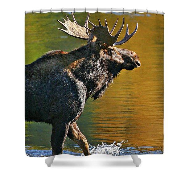 Wading Moose Shower Curtain