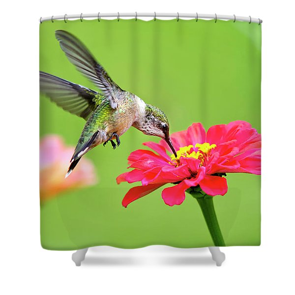 Waiting In The Wings Shower Curtain