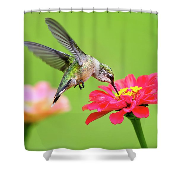Waiting In The Wings Hummingbird Square Shower Curtain