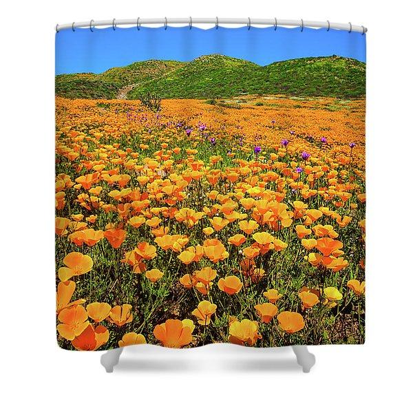 Walker Canyon Wildflowers Shower Curtain