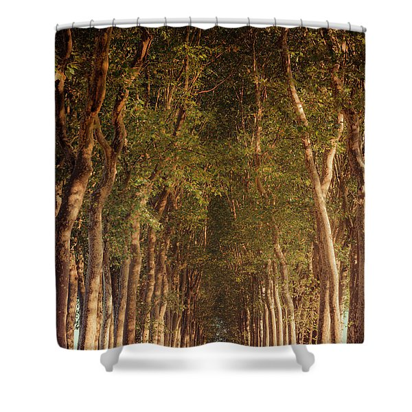 Warm French Tree Lined Country Lane Shower Curtain