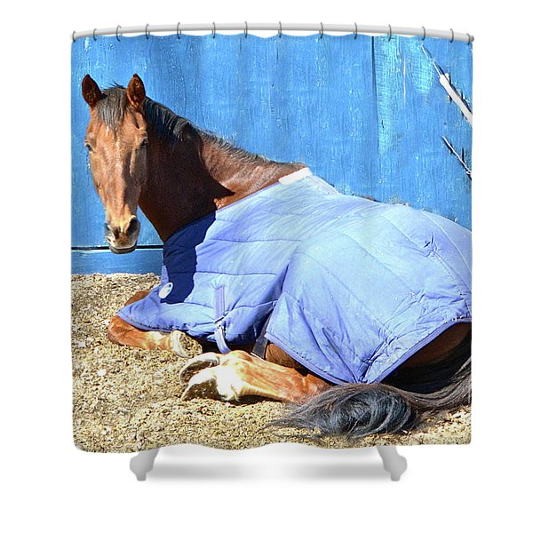Warm Winter Day At The Horse Barn Shower Curtain