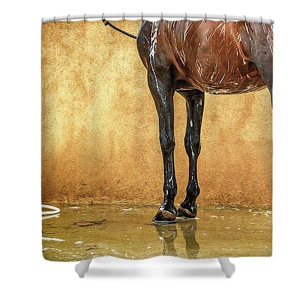 Washing A Horse Shower Curtain