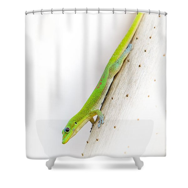 Watch Out Ants...here I Come Shower Curtain