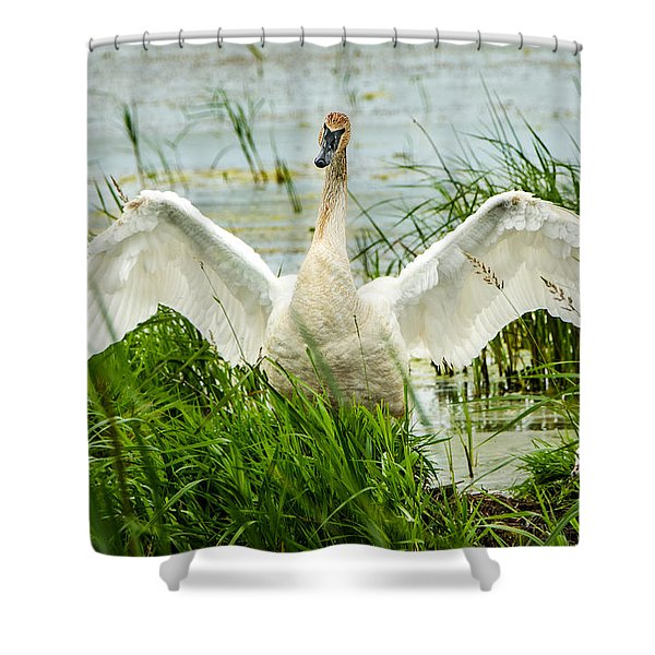 Watching Over Shower Curtain