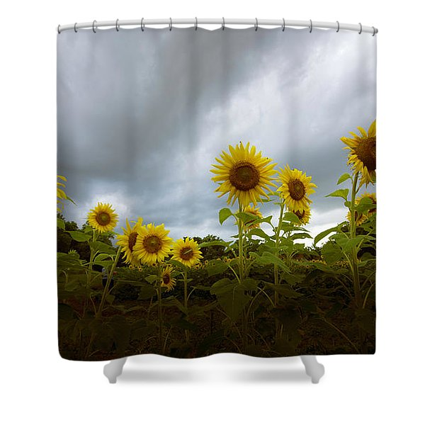 Water Daily Shower Curtain