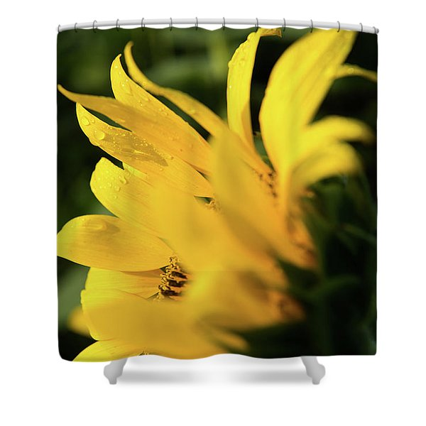 Water Drops And Sunflower Petals Shower Curtain