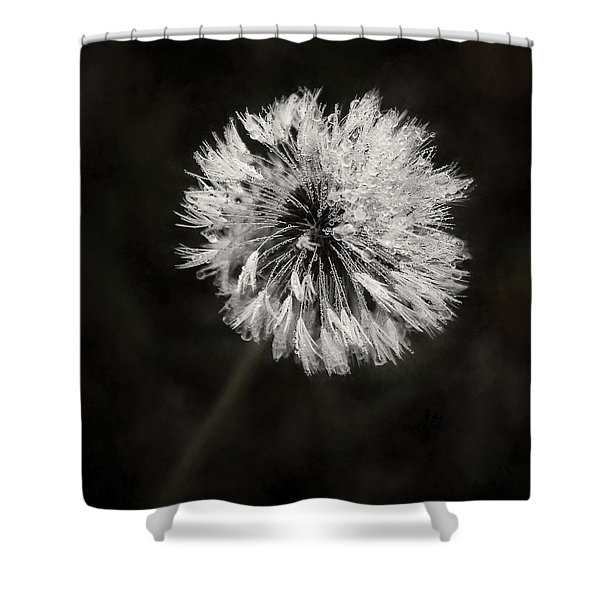 Water Drops On Dandelion Flower Shower Curtain
