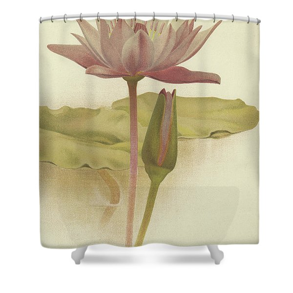 Water Lily  Nymphaea Zanzibarensis Shower Curtain