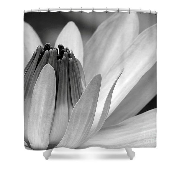 Water Lily Opening Shower Curtain