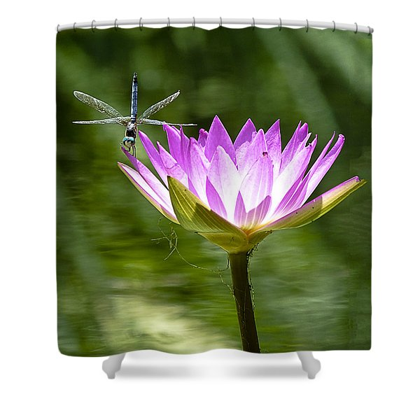 Water Lily With Dragon Fly Shower Curtain