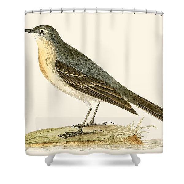 Water Pipit Shower Curtain
