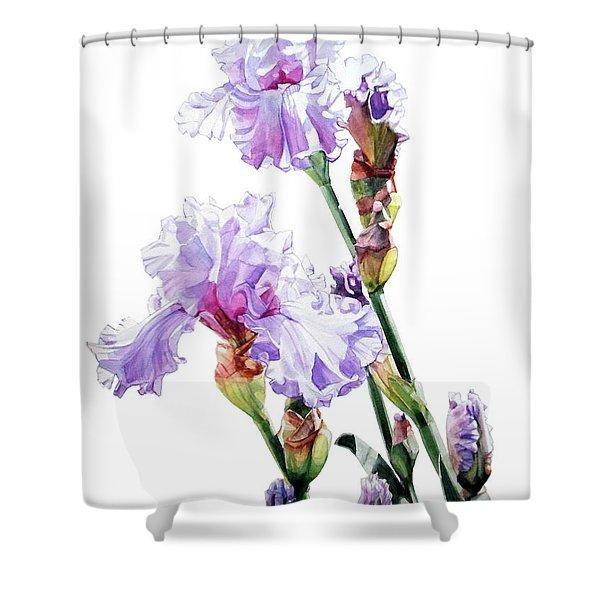 Watercolor Of A Tall Bearded Iris I Call Lilac Iris Wendi Shower Curtain