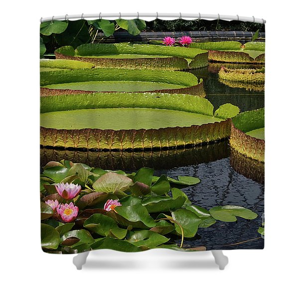 Waterlilies North And South Shower Curtain