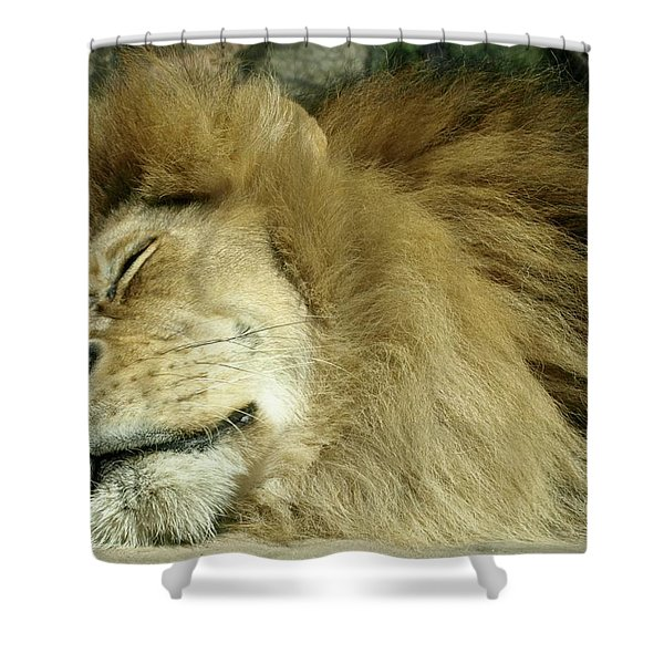 We All Like To Pass As Cats Shower Curtain