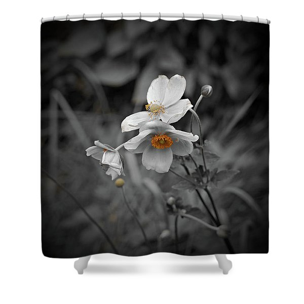 We Fade To Grey 4 Shower Curtain