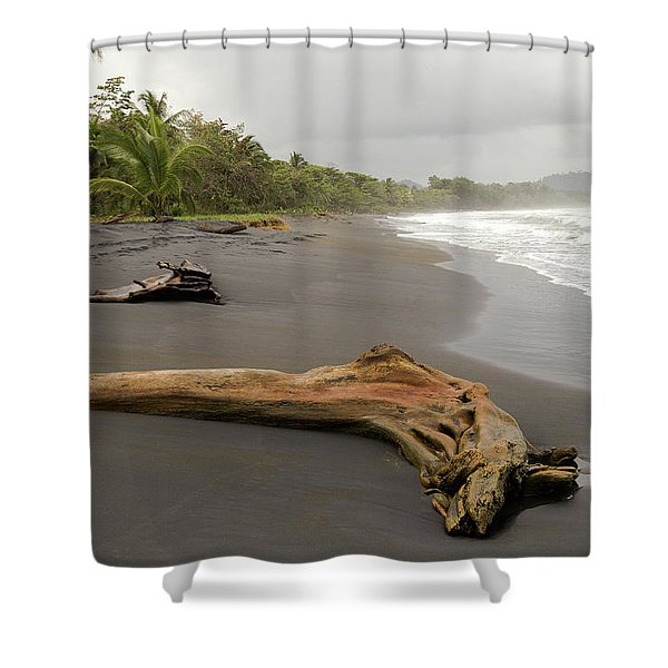 Weathered Tree On Costa Rica Beach Shower Curtain