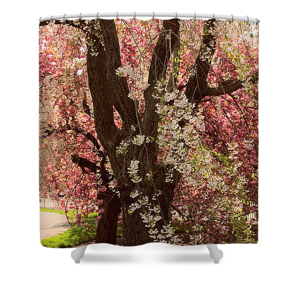 Weeping Cherry Panel Shower Curtain
