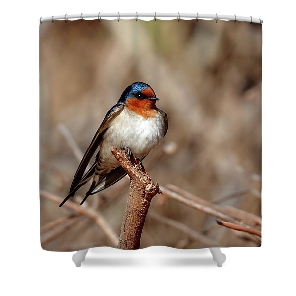 Welcome Swallow Shower Curtain