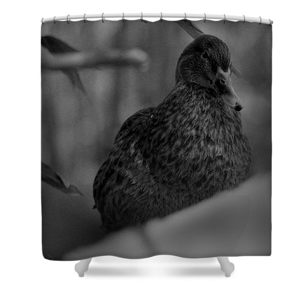 Well, Hi There. Shower Curtain