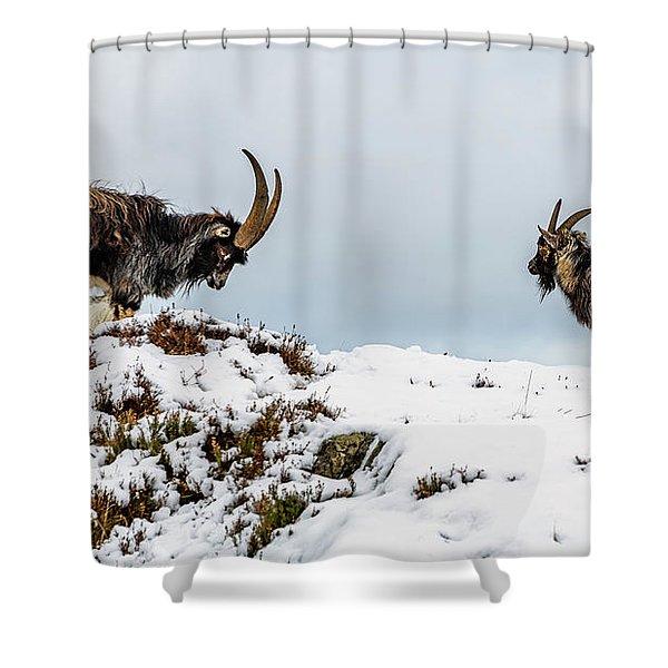 Welsh Mountain Goats Shower Curtain