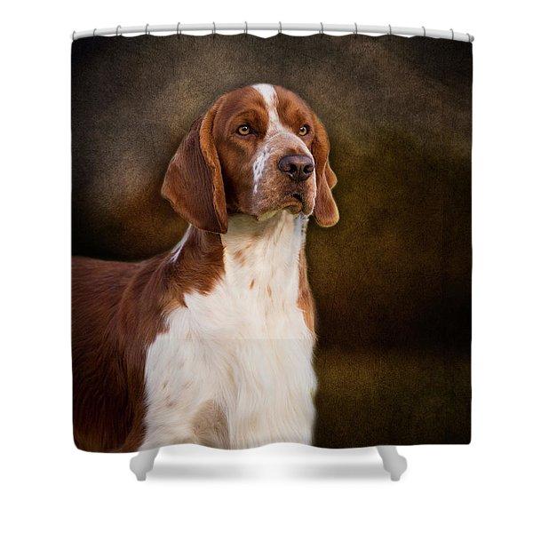 Welsh Springer Spaniel Shower Curtain