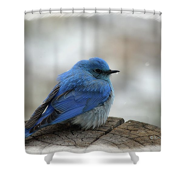 Western Bluebird On Cold Day Shower Curtain