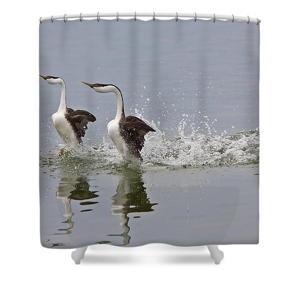 Western Grebe On Lake Shower Curtain