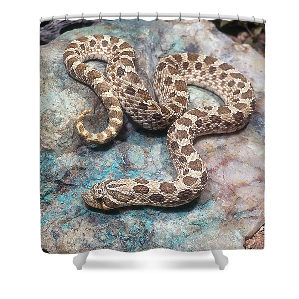 Western Hognose Snake Shower Curtain