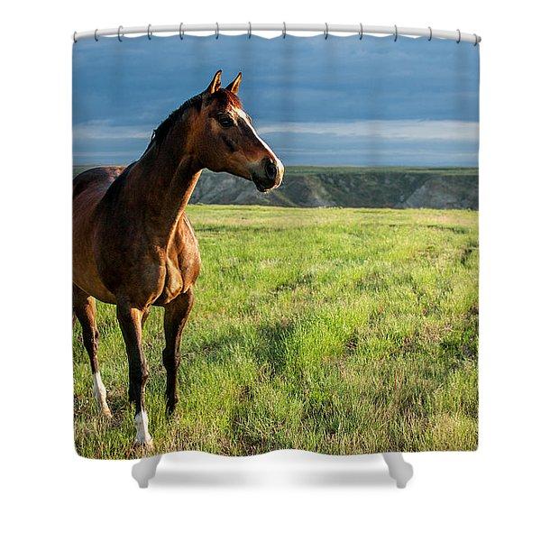 Western Stallion Shower Curtain