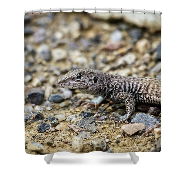Western Whiptail Shower Curtain