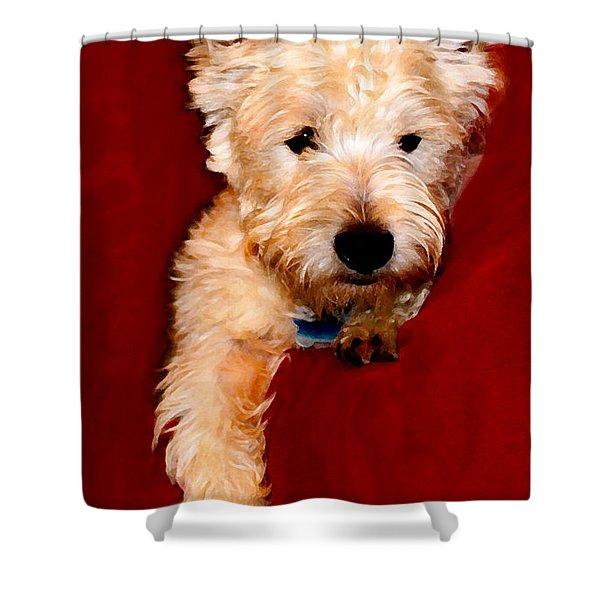Westie Boy Shower Curtain