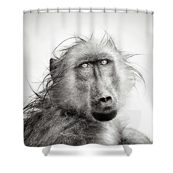 Wet Baboon Portrait Shower Curtain
