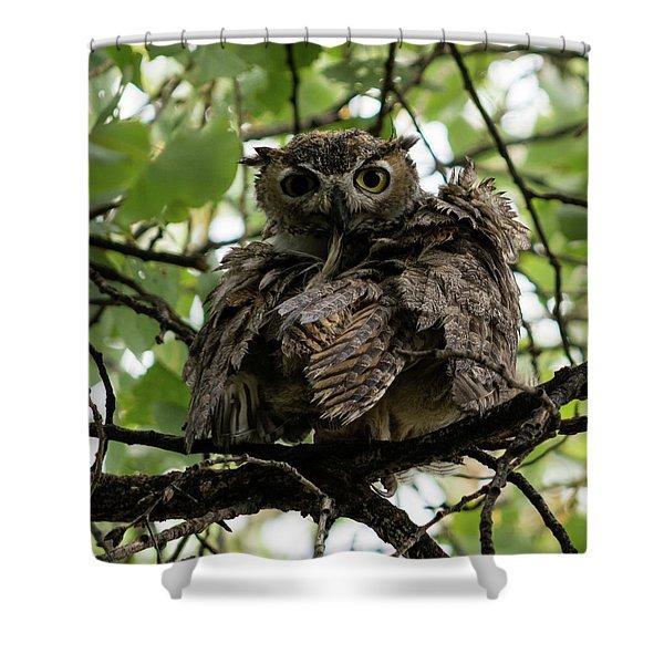 Wet Owl Shower Curtain